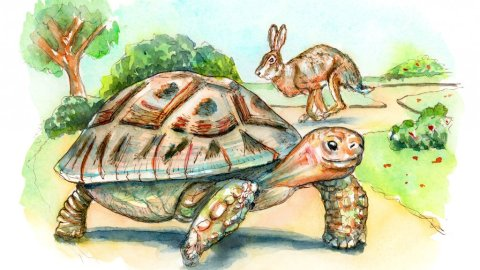 Tortoise And The Hare Watercolor Painting Illustration