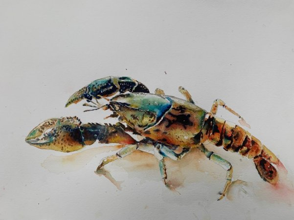 Lobster Realistic Watercolor Painting