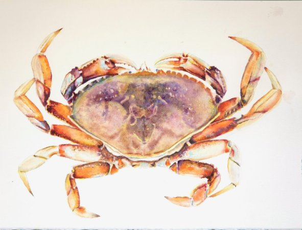 Realistic Crab Watercolor Painting