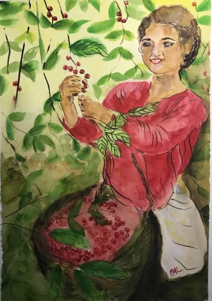 Coffee harvest 5964FB56-A0D9-4CAB-8EBB-311C5C9B7A3C65B45FB8-F821-4FE6-A422-D4C3CC4BE6C6