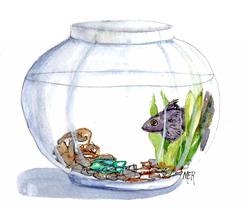 """9/2/20 Pet Once upon a long time ago I had a pet fish named \""""Gus\"""". 9.2.20 Pet img002"""
