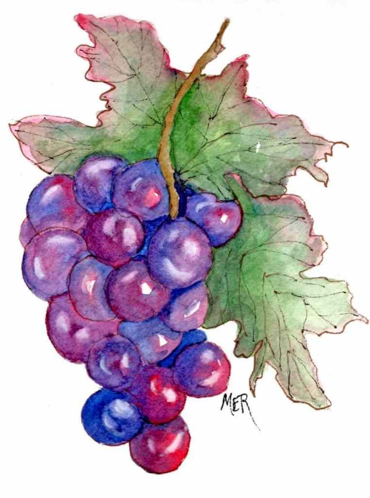 9/21/20 Grapes 9.21.20 Grapes img035