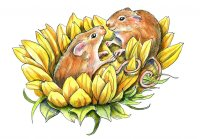 Harvest Mice On Sunflower Watercolor Painting Illustration