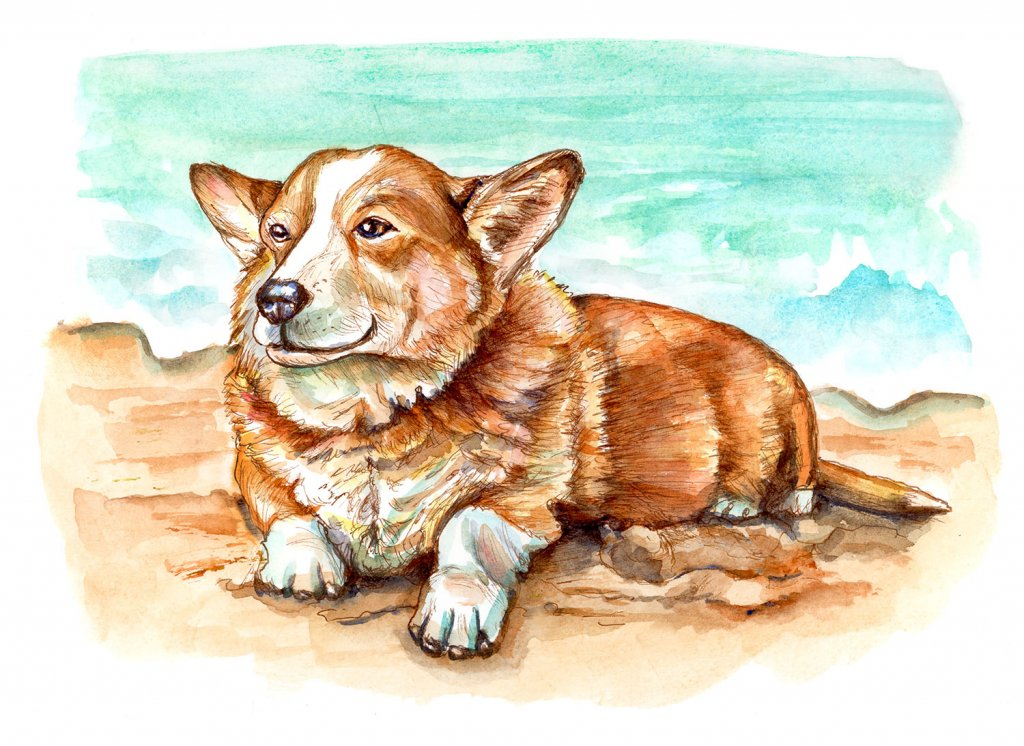 Happy Corgi Dog On Beach Watercolor Painting Illustration