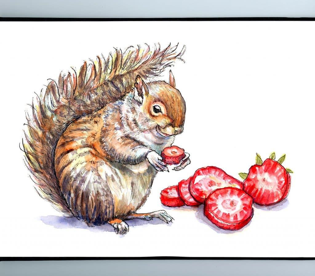 Squirrel Eating Strawberries Watercolor Painting Illustration Sketchbook