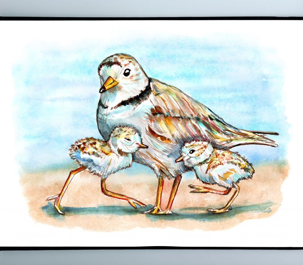 Piping Plover Chicks And Mom Shorebirds Watercolor Painting Illustration Sketchbook Detail