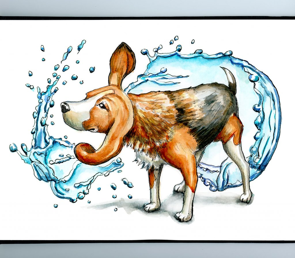 Beagle Shaking Off Water Wet Watercolor Illustration Painting Sketchbook Detail
