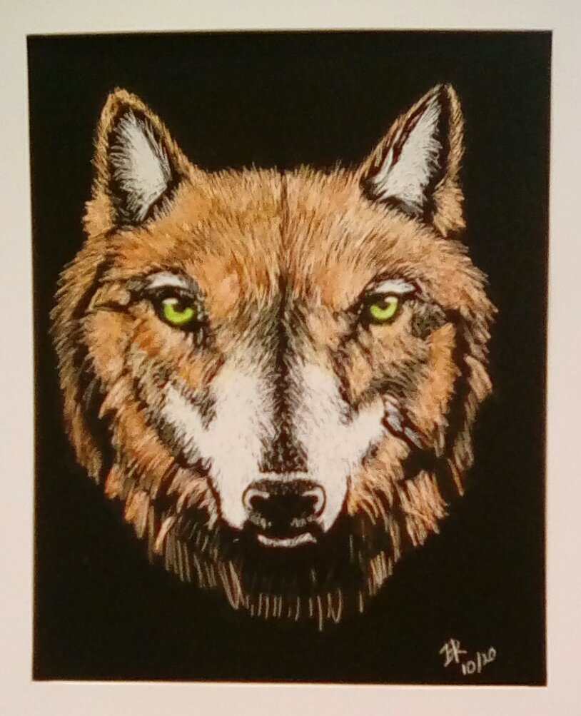 Trying a new medium scratch board with watercolor wash. Image is my pet red wolf Meadow. IMG_2020100