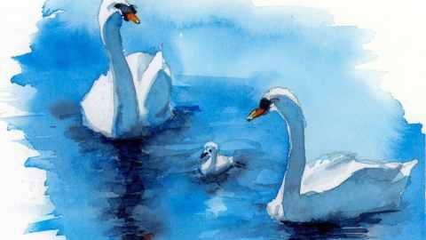 Swans Three studio watercolor painting by Kris DeBruine