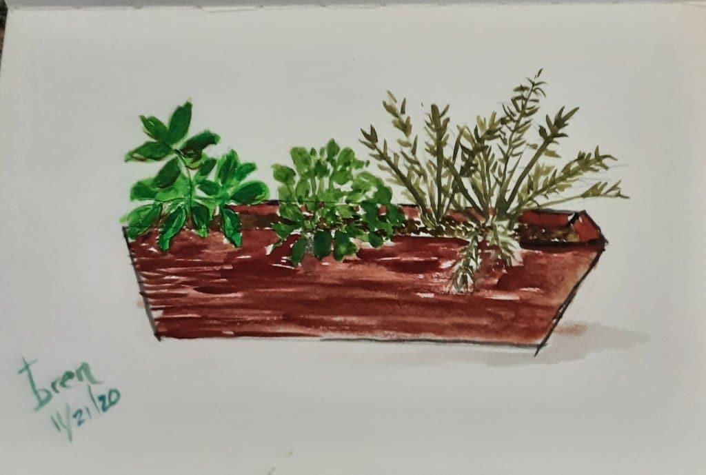 My little herb garden.🌱 20201122_142435