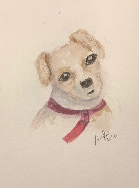 #doodlewashnovember2020 day 23 puppy: This cute puppy belongs to the daughter of a friend of ours. I