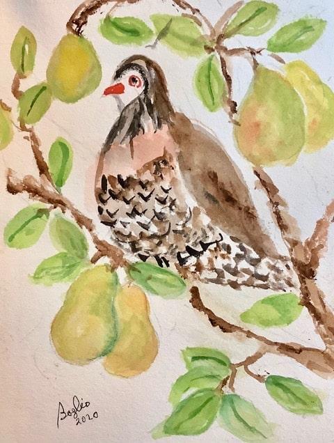 #ddoodlewashdecember2020 day 21; Partridge (in a pear tree) IMG_2703