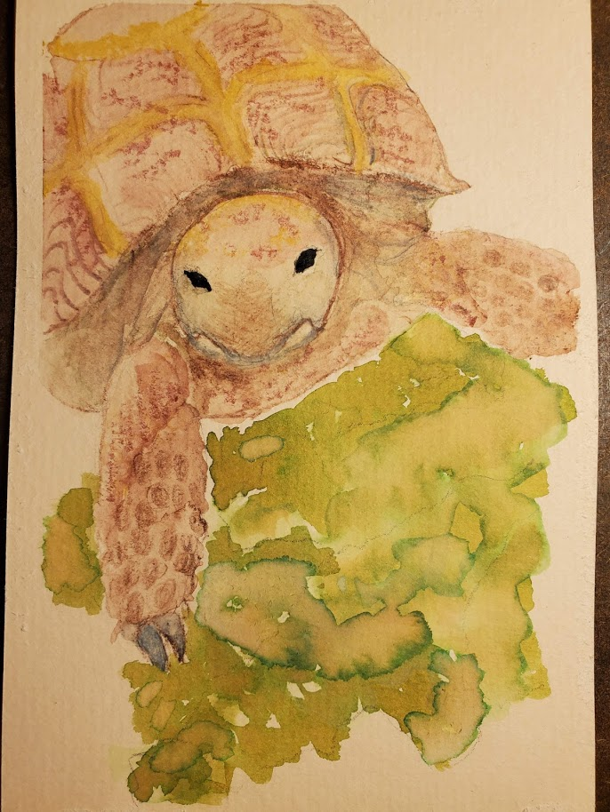 Puppy was today's prompt, but I drew my puppy recently, so I did my son's tortoise on a
