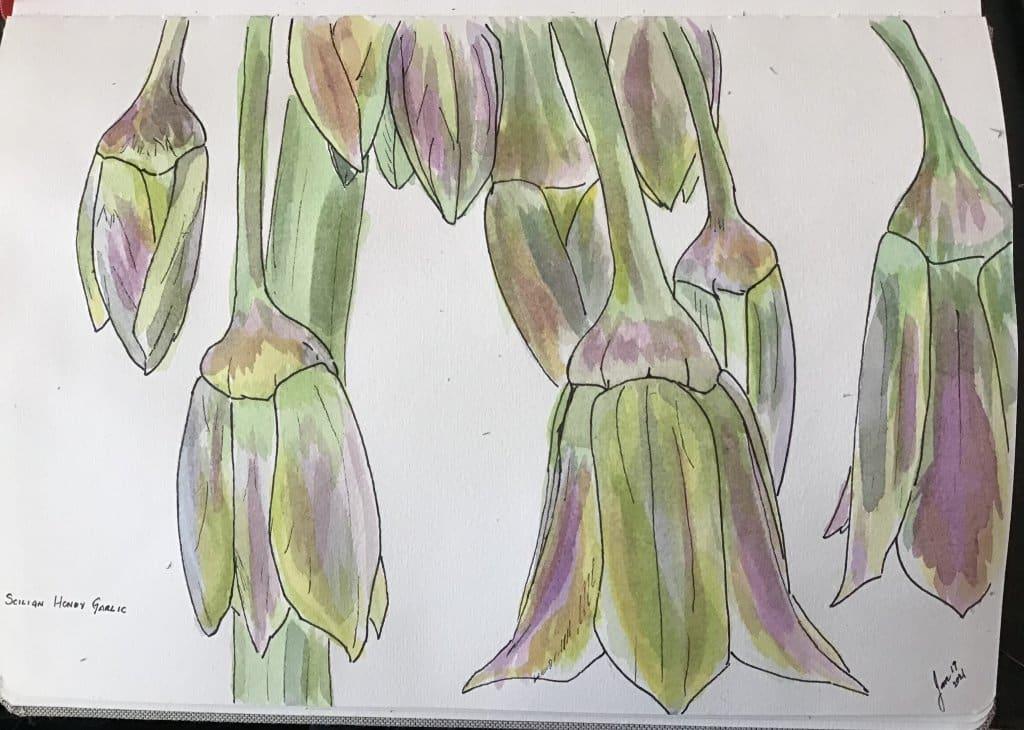 Sicilian Honey Garlic 8AE2F262-ECD4-4762-BEAC-3DC4AF241A61