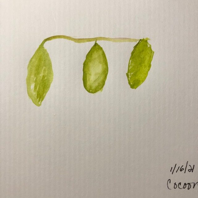 #doodlewashjanuary2021 growing. cocoon and yarn… Daily painting not daily posting 🙂 IMG_627