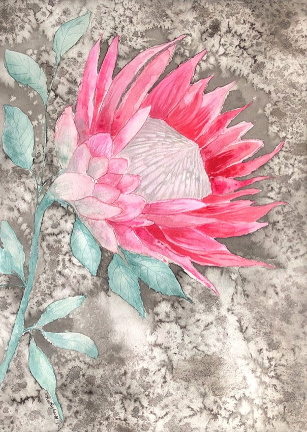 KING PROTEA BLK MAT Watercolor by Kathy Lee