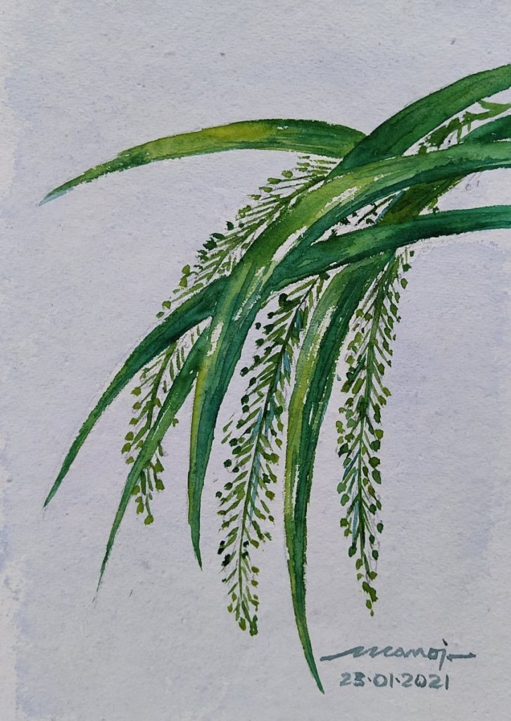 Dt: 23.01.2021 Sub: SEEDS Watercolor painting on handmade paper inbound2598645271225818722