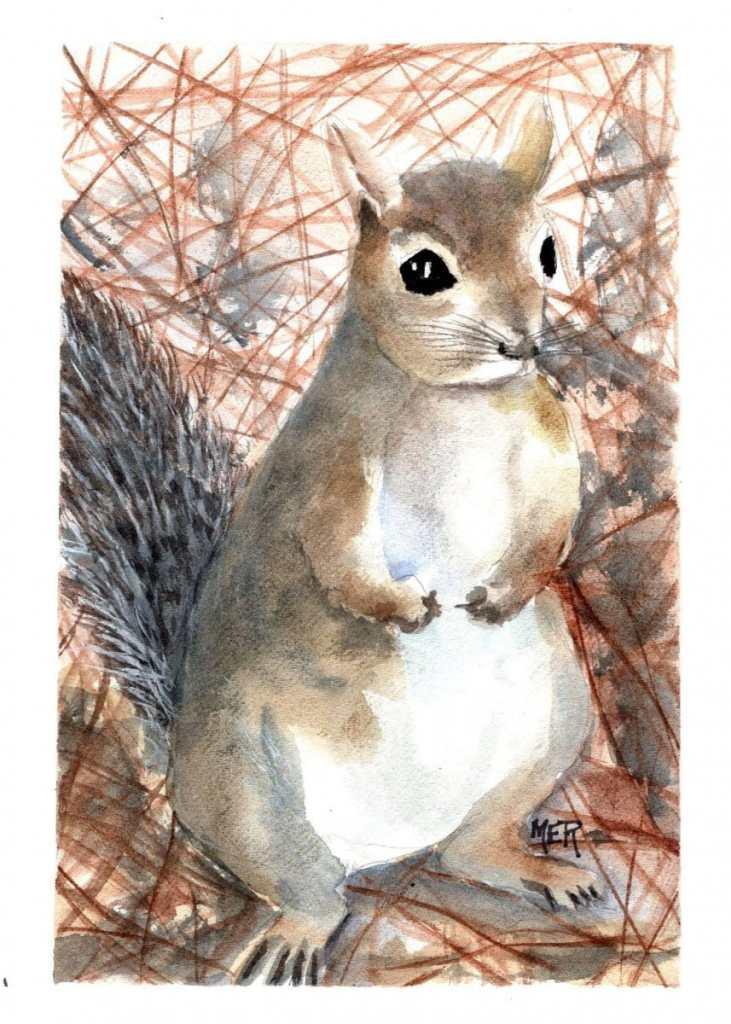 2/11/21 Squirrel 2.11.21 Squirrel img001