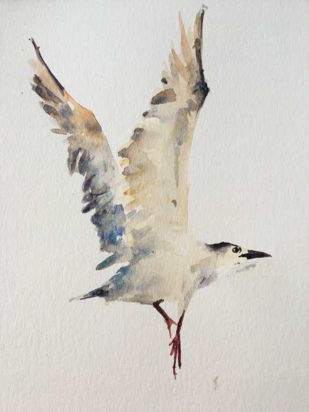 Bird watercolour painting by Kusum Shabong