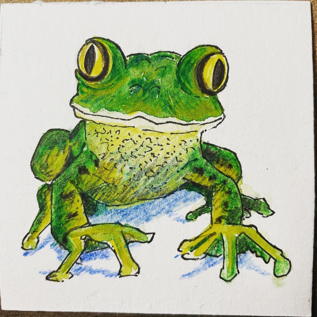 Day 5 frog – did you know… Frogs use their eyes to help them swallow food. After a frog