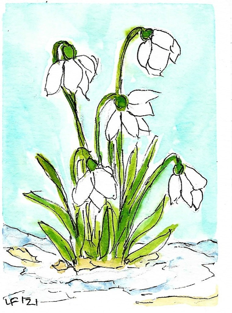 Snowdrops Just a quick sketch, been so busy lately 🙁 Snowdrops
