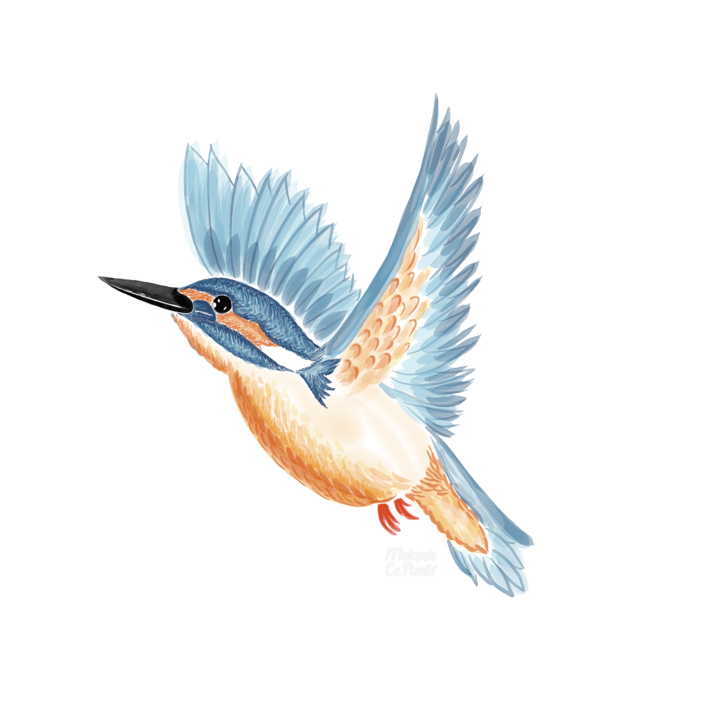 #8 kingfisher – wasn't easy this time for me – letting the colors just flow 🙂 k