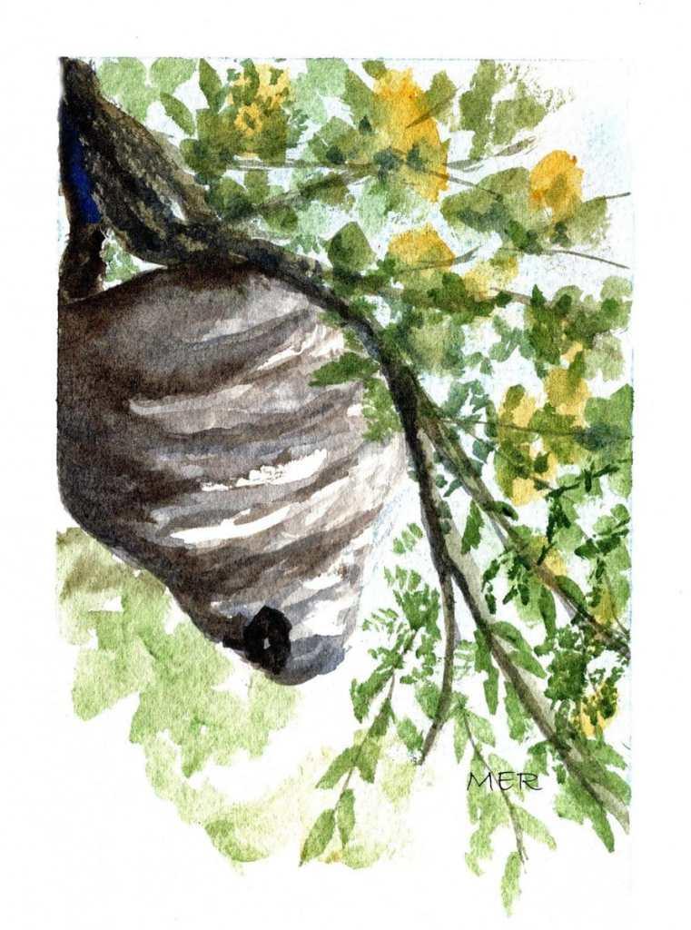 3/5/21 Nest Hornets/wasps not my favorite creatures but important pollinators and predators of crop