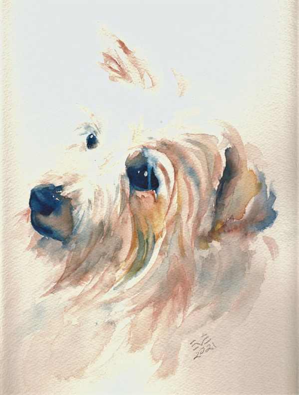 Boomer Dog Pet Portrait Watercolour
