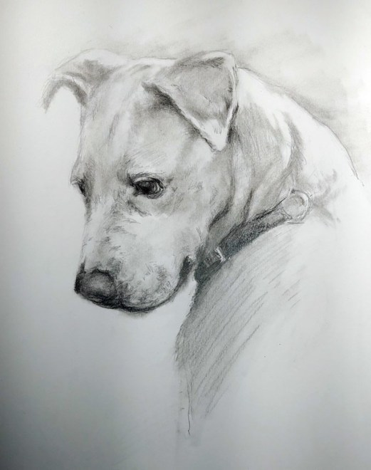 Holly Pet Portrait Dog Drawing