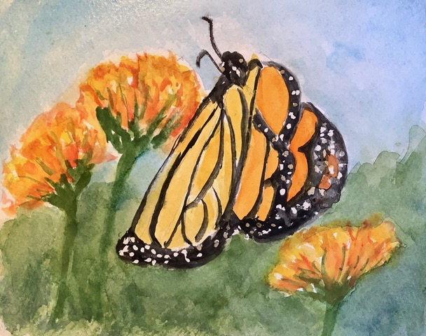 #doodlewashmarch2021. day 6 Monarch: We saw this Monarch butterfly in Gibraltar's botanical garden