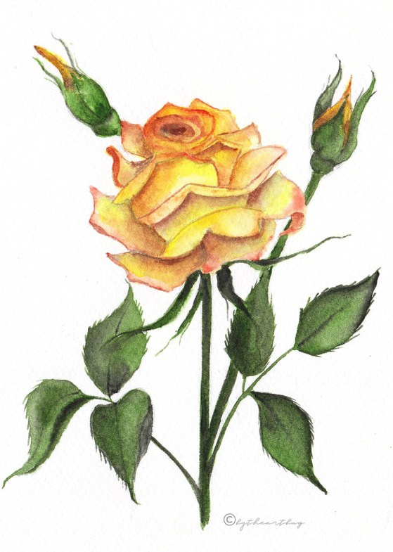 Yellow Rose Watercolor Painting bytheartbug (4)