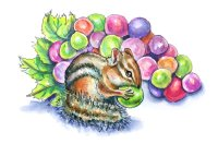 Chipmunk Eating Colorful Rainbow Grapes Watercolor Illustration