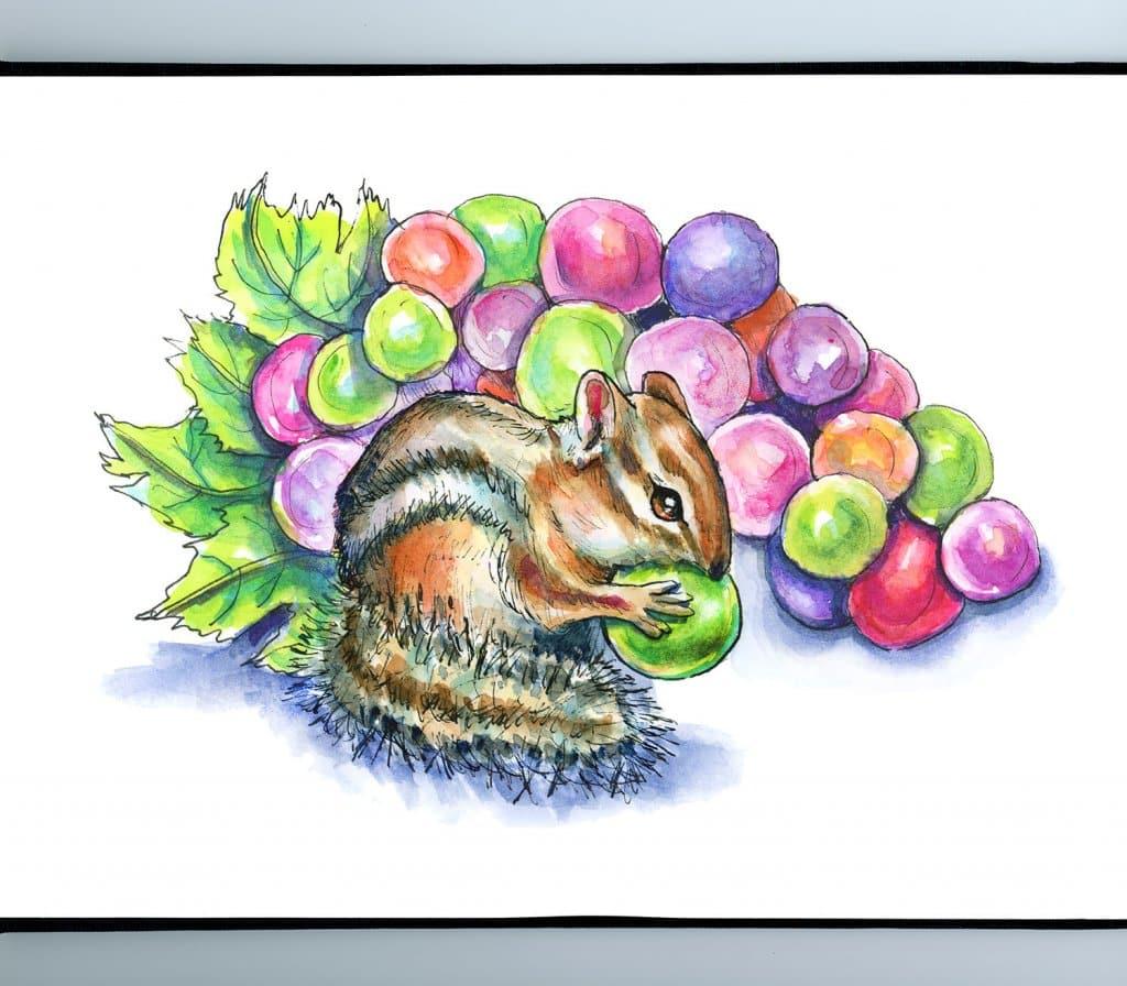 Chipmunk Eating Colorful Rainbow Grapes Watercolor Illustration Sketchbook Detail