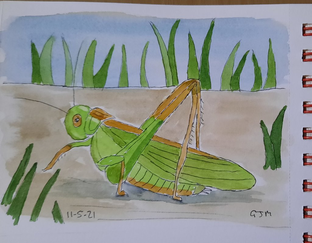 #doodlewashmay2021 Day 12 Crickets #worldwatercolorgroup 20210511_210606