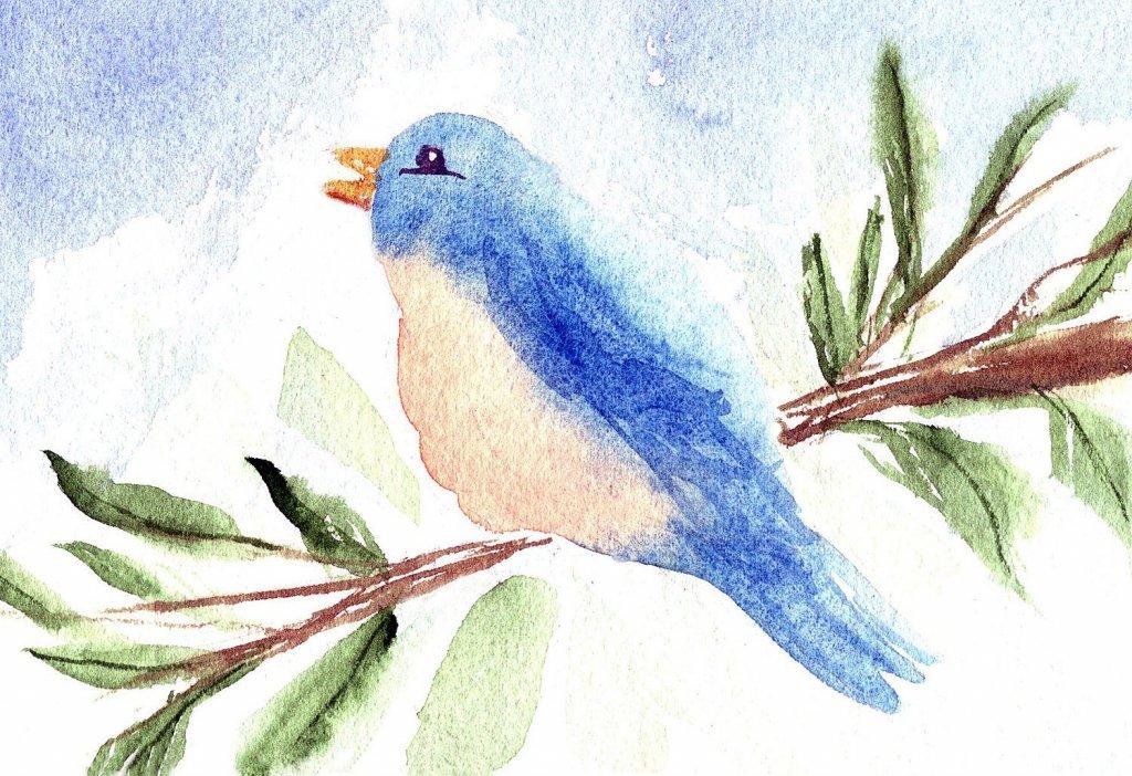 5/8/21 Bluebird 5.8.21 Bluebird img001