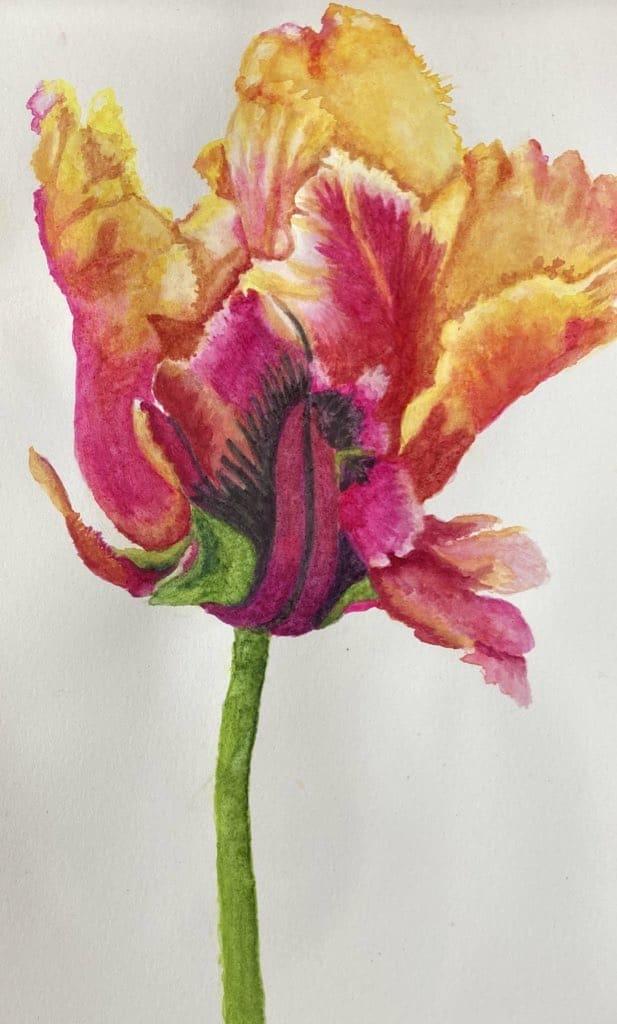 Parrot tulip 5580C801-A931-4A13-A02B-241E0C932831