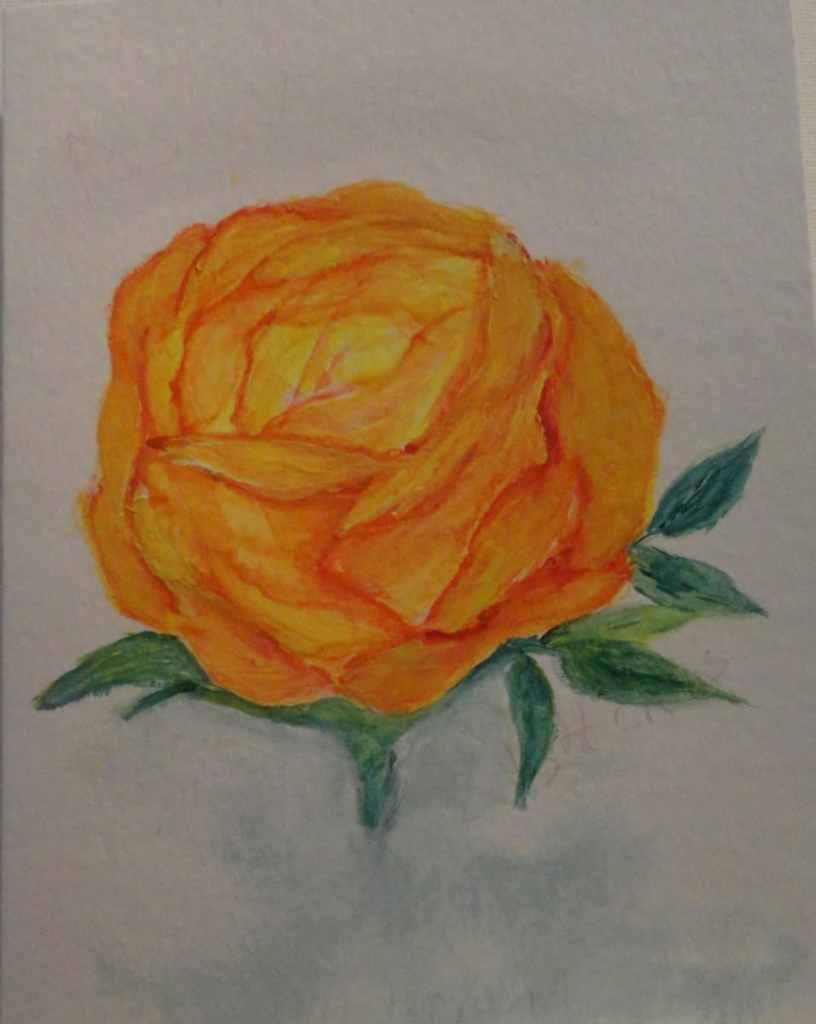 Citrus Splash Rose Watercolor painting by Rosie Foshee May 29 2021