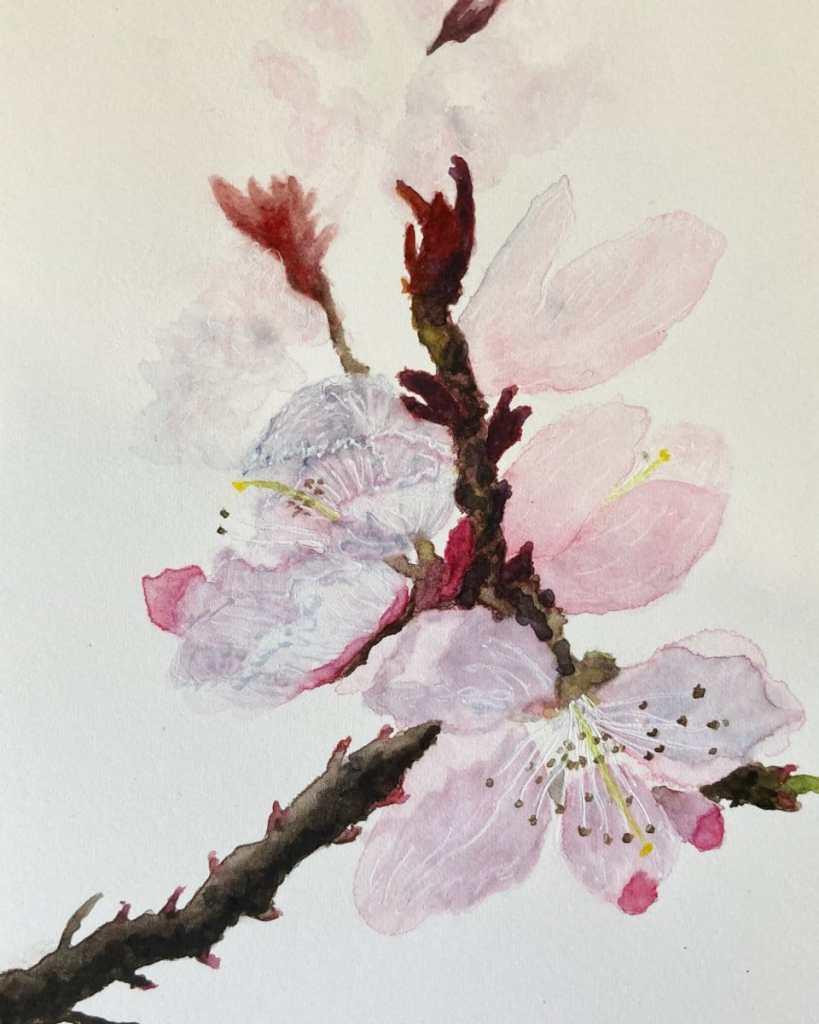 Peach blossom EA10A42B-3EB1-40C8-AD1A-7A261802AF9D