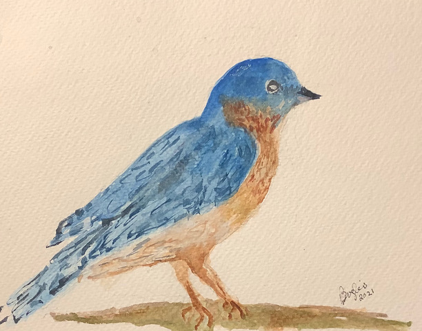 """#doodlewashmay2021 day 8: The """"Bluebird"""" is a handsome fine feathered friend that visits"""