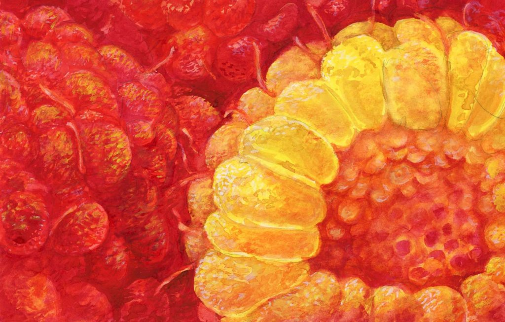 Yellow Oranges and Reds Painting using Aquafine Watercolour