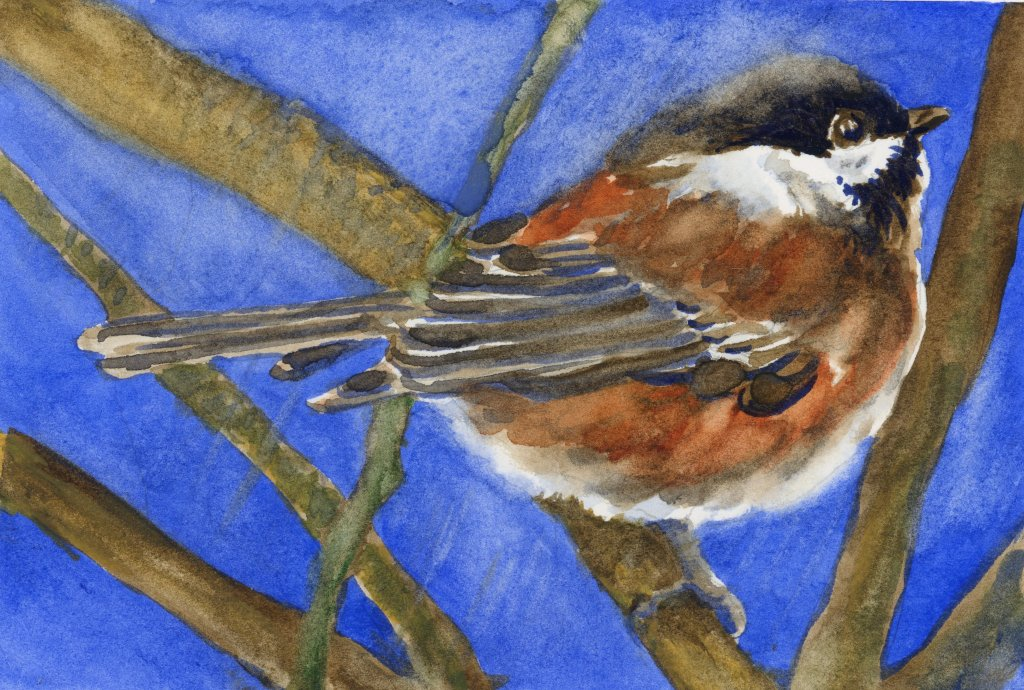 #DoodlewashJune2021 prompt: Chickadee. Did you know that chickadees hide food like squirrels and sim