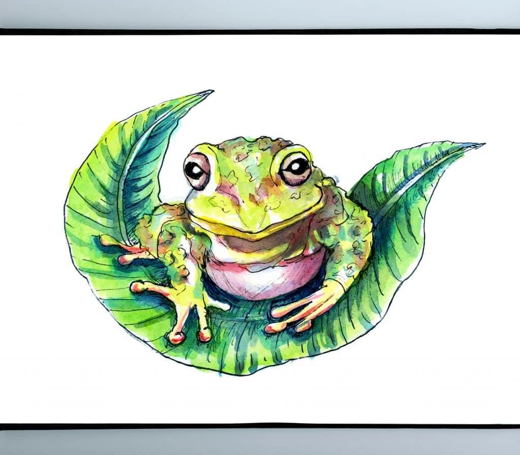 Frog On Leaf Watercolor Illustration Painting Sketchbook Detail