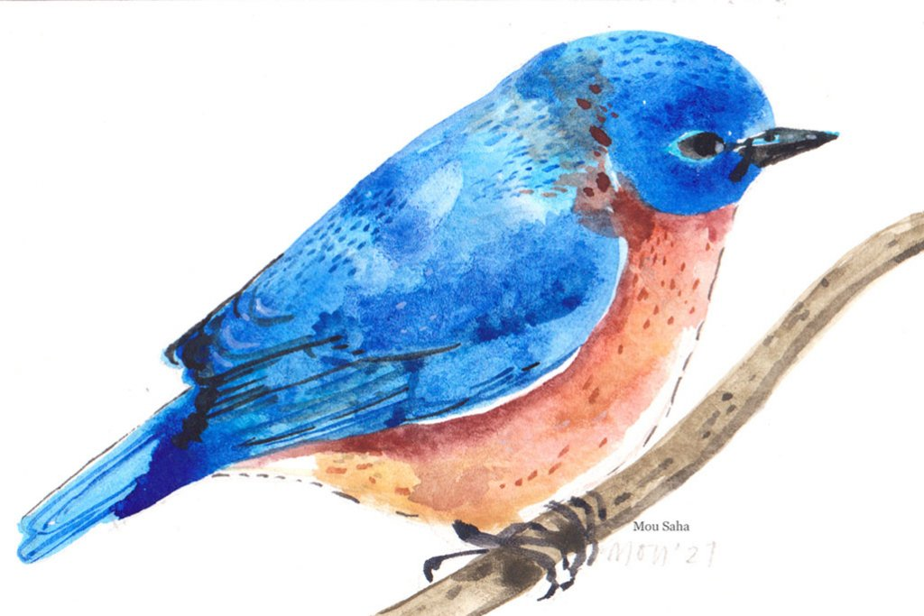 MouSaha_ Watercolor Artist DoodlewashBlog_FC_PanWatercolors_EasternBlueBird