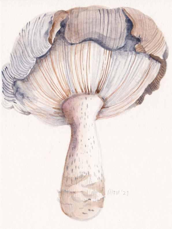 MouSaha_DoodlewashBlog_FC_PanWatercolors_Mushroom