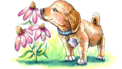 Puppy Smelling Flowers Coneflowers Watercolor Illustration Painting