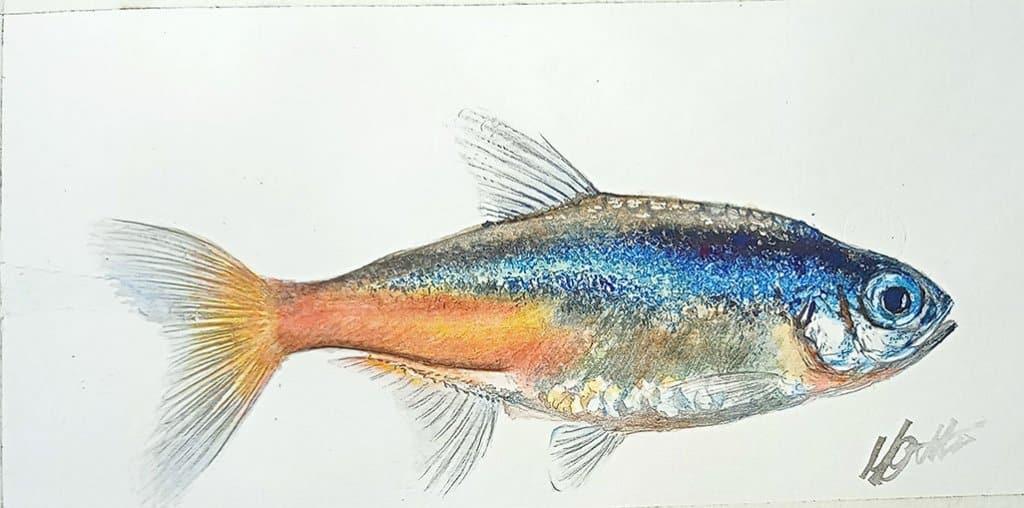 Watercolor Fish Iridescent