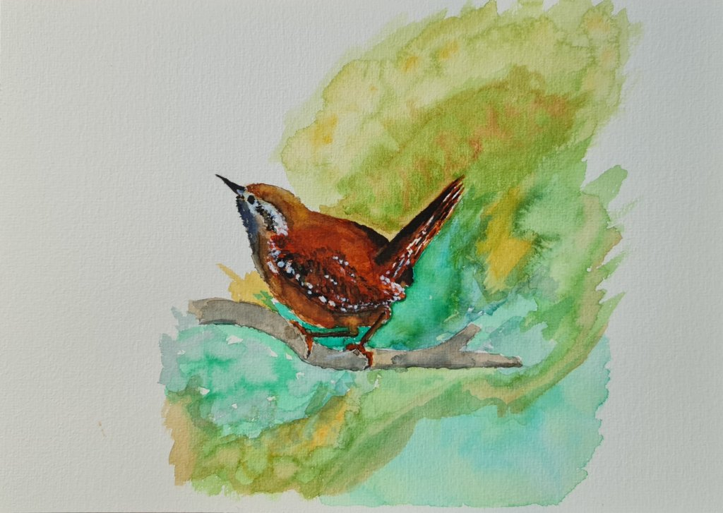 A Jenny Wren, my first real painting. Drawn along with a tutorial of Paul Apps on YouTube. 20210905_