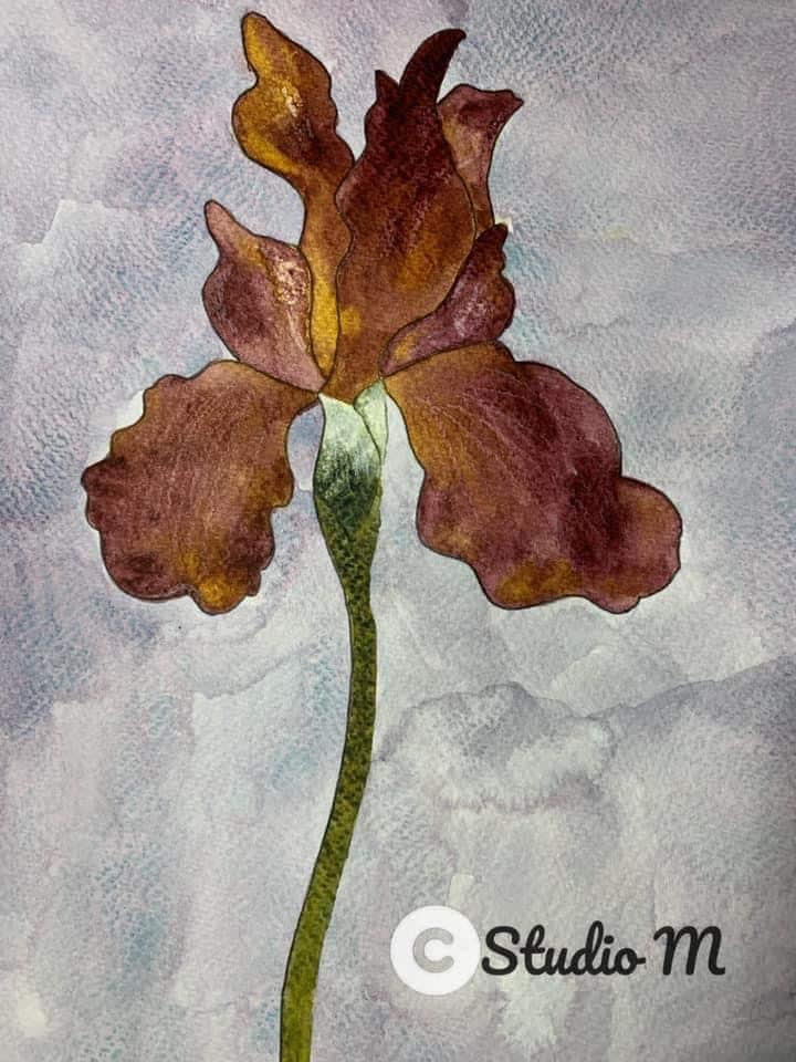 Iris in Daniel Smith watercolor FB5BF610-5580-4FAF-B6DA-70EFB295E5A2