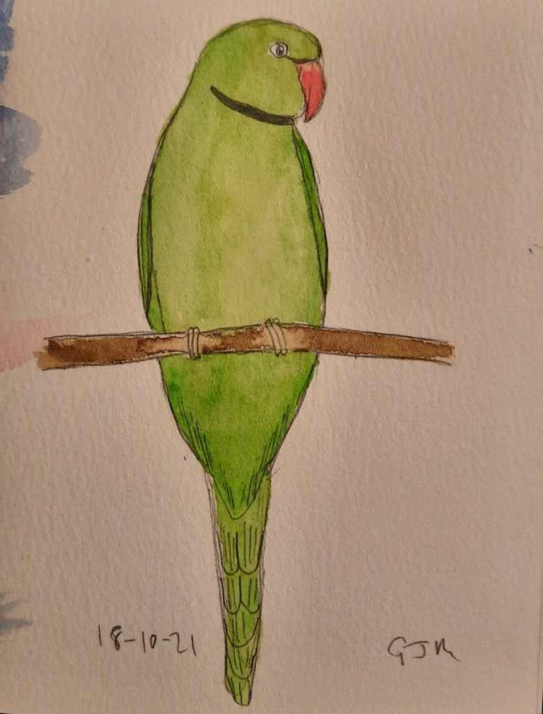 Ringneck parakeet. #doodlewashoctober2021 Day 19 Ring #worldwatercolorgroup 20211018_200744