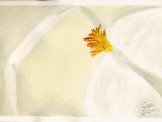 2017 Magnolia Bloom